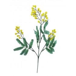 Rama Mimosa