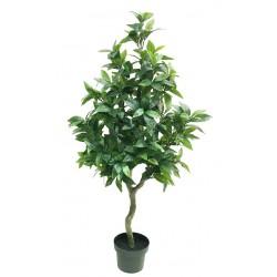 Árbol Laurel
