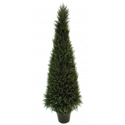 Arbol Tuya 165 cm