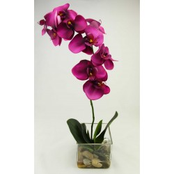 Orquidea Phalaenopsis Natur Burdeos