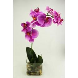Orquidea Phalaenopsis Natur Lila