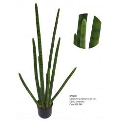 Sanseviera  Cylindrica