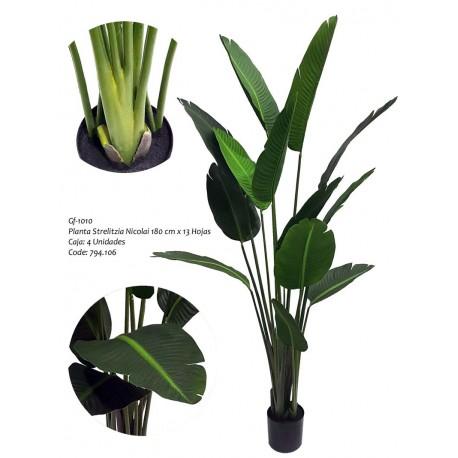 Planta Sterlizia