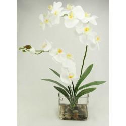 Orquidea Nature x 2 blanca con hojas de Cymbidium