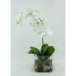Orquidea Phalaenopsis  en Cubo Cristal