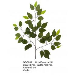 Rama Ficus X 42