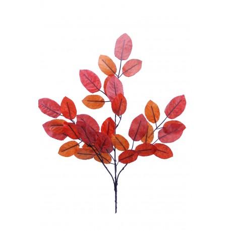 Rama Olmo Naranja